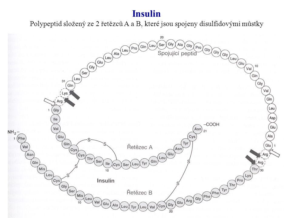 Insulin Polypeptid složený ze 2 řetězců A a B, které jsou spojeny disulfidovými můstky