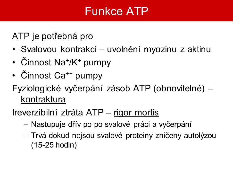 Funkce ATP ATP je potřebná pro