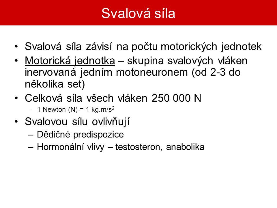 Svalová síla Svalová síla závisí na počtu motorických jednotek