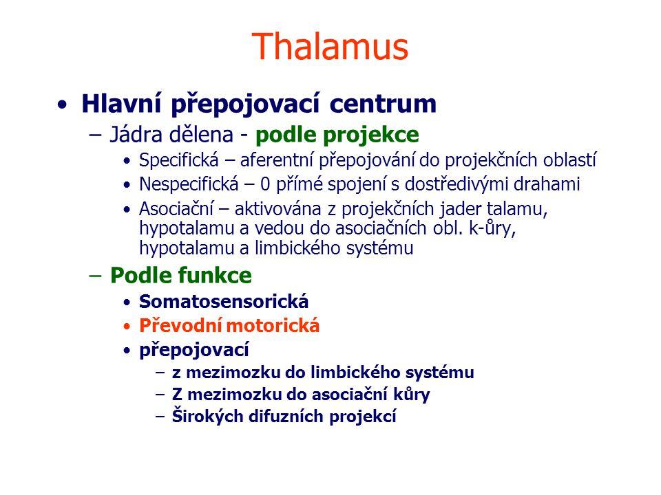Thalamus Hlavní přepojovací centrum Jádra dělena - podle projekce