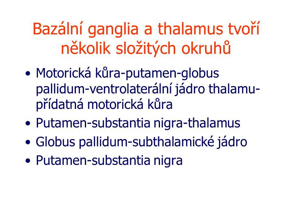 Bazální ganglia a thalamus tvoří několik složitých okruhů