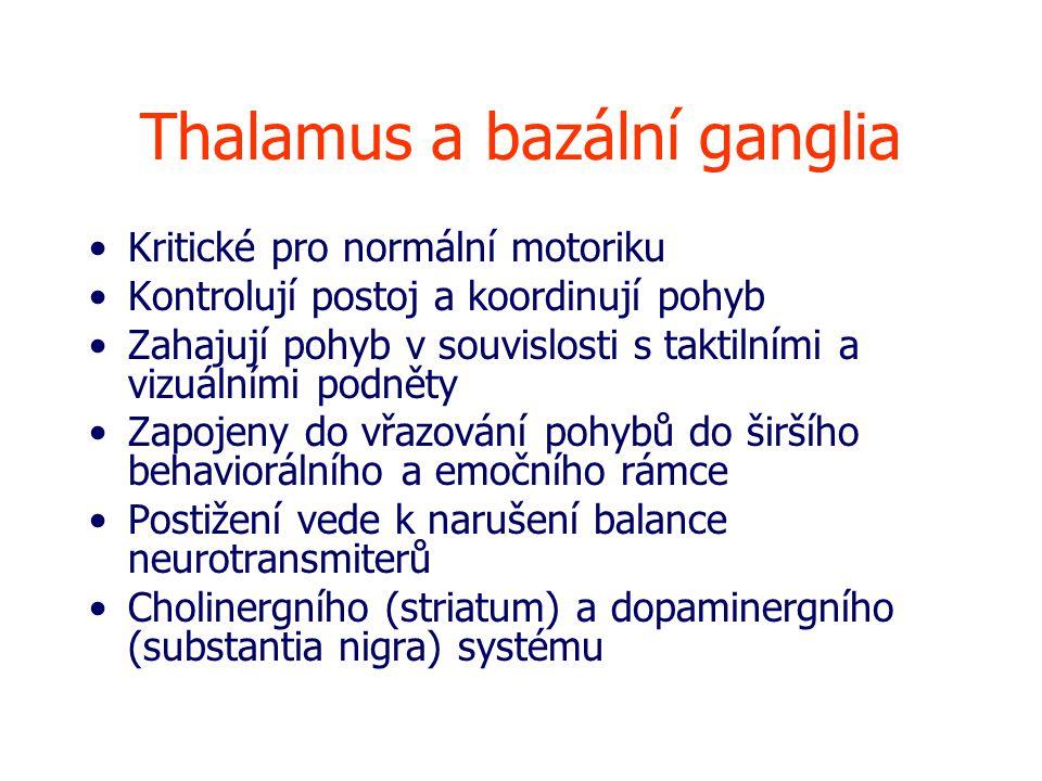 Thalamus a bazální ganglia