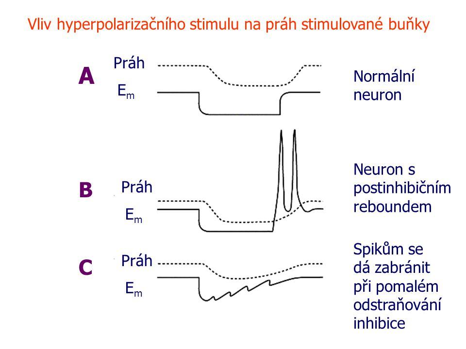 A B C Vliv hyperpolarizačního stimulu na práh stimulované buňky Práh