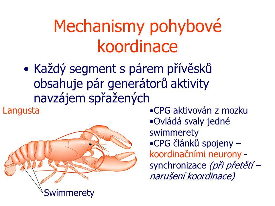 Mechanismy pohybové koordinace