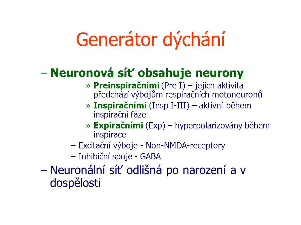 Generátor dýchání Neuronová síť obsahuje neurony