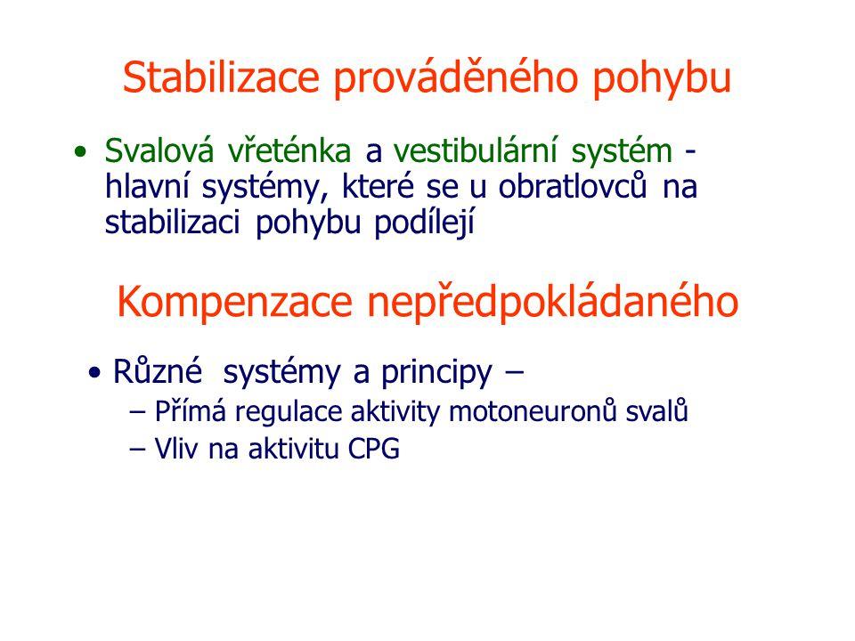 Stabilizace prováděného pohybu
