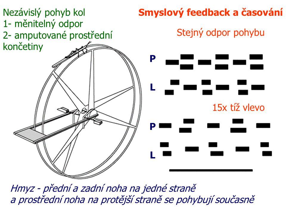 Nezávislý pohyb kol 1- měnitelný odpor. 2- amputované prostřední. končetiny. Smyslový feedback a časování.