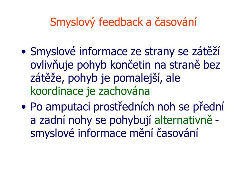 Smyslový feedback a časování