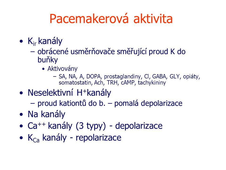 Pacemakerová aktivita