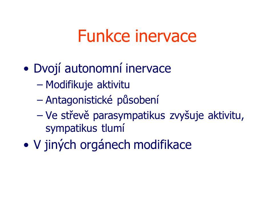 Funkce inervace Dvojí autonomní inervace V jiných orgánech modifikace