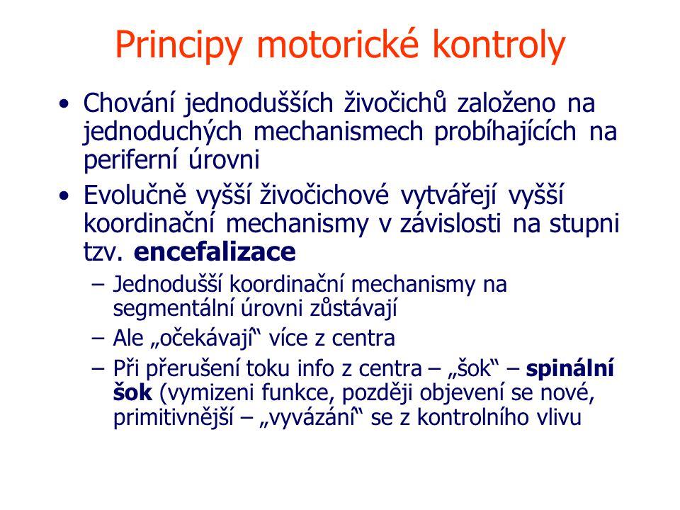 Principy motorické kontroly