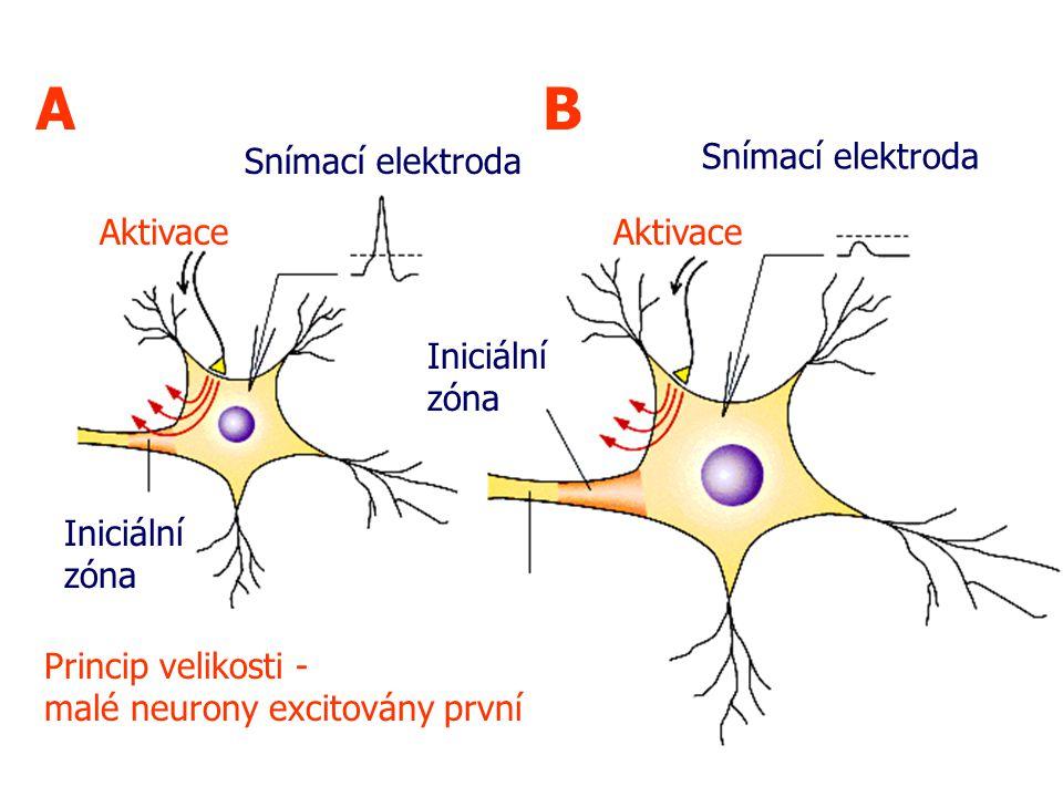 A B Snímací elektroda Snímací elektroda Aktivace Aktivace