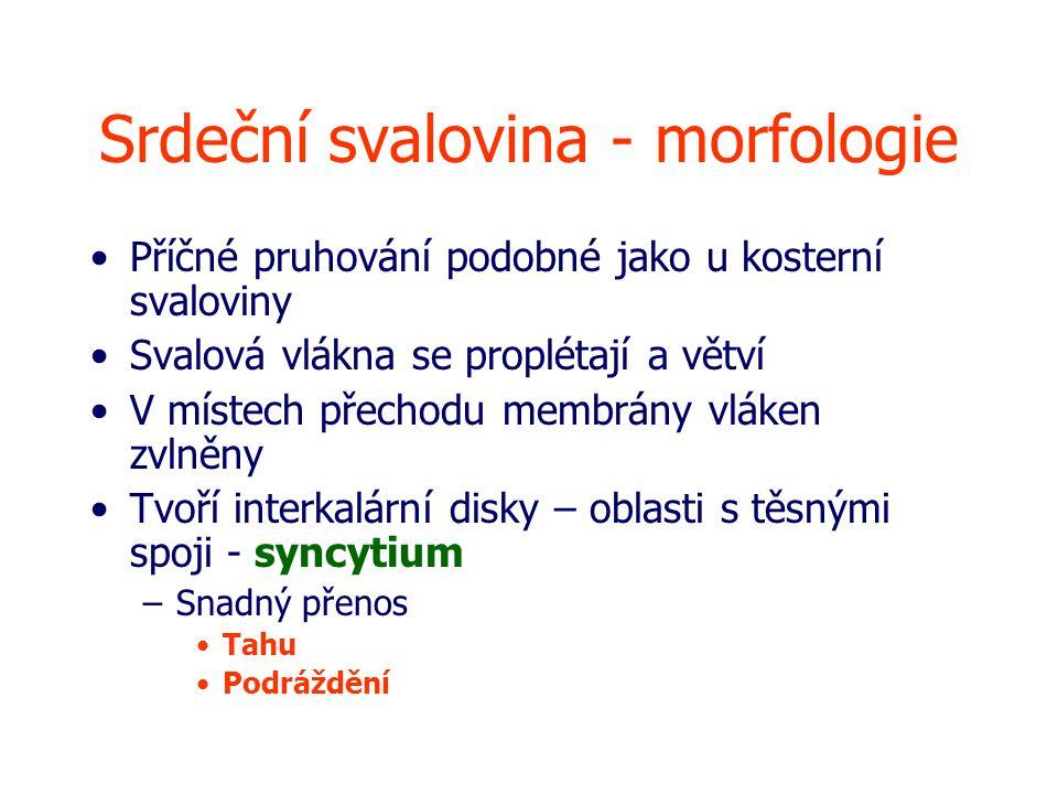 Srdeční svalovina - morfologie