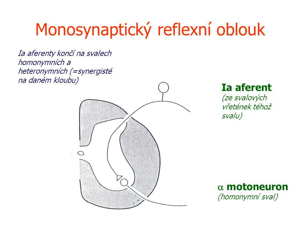 Monosynaptický reflexní oblouk