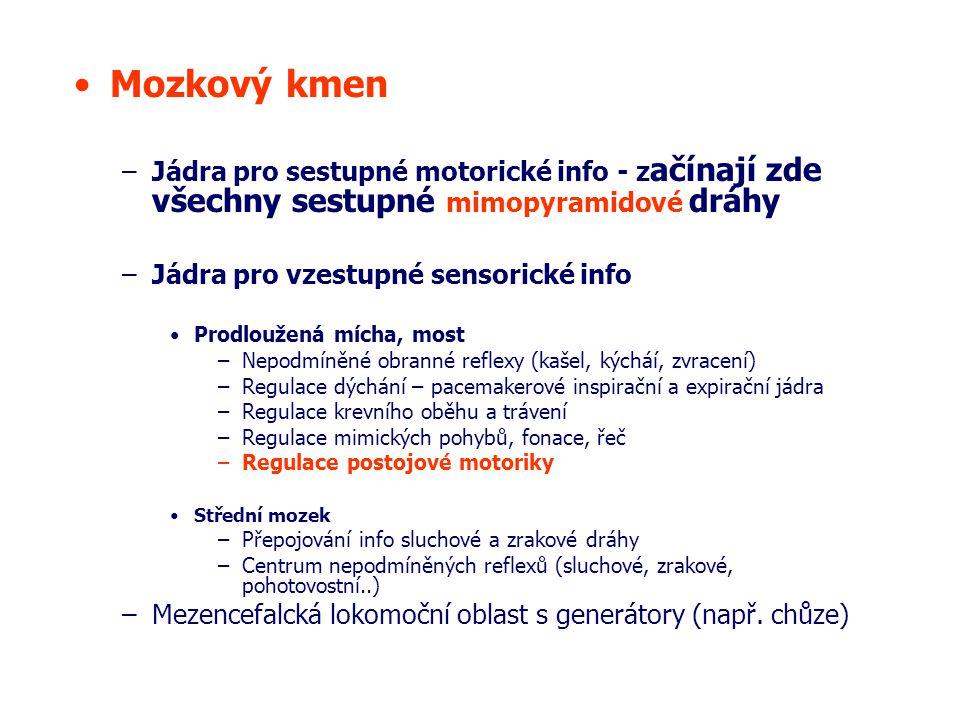 Mozkový kmen Jádra pro sestupné motorické info - začínají zde všechny sestupné mimopyramidové dráhy.