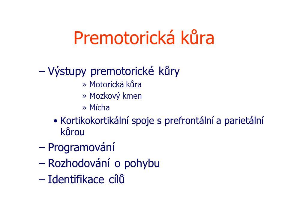 Premotorická kůra Výstupy premotorické kůry Programování