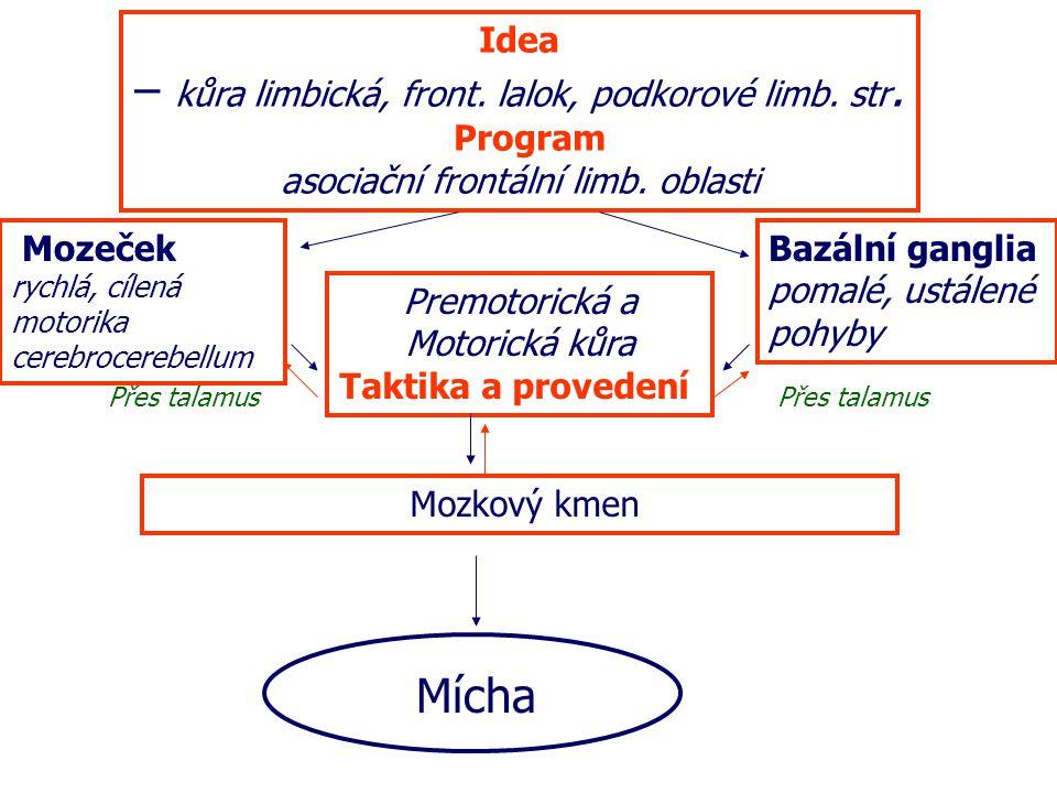 – kůra limbická, front. lalok, podkorové limb. str.