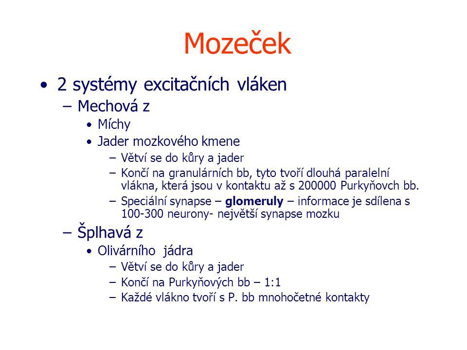 Mozeček 2 systémy excitačních vláken Mechová z Šplhavá z Míchy