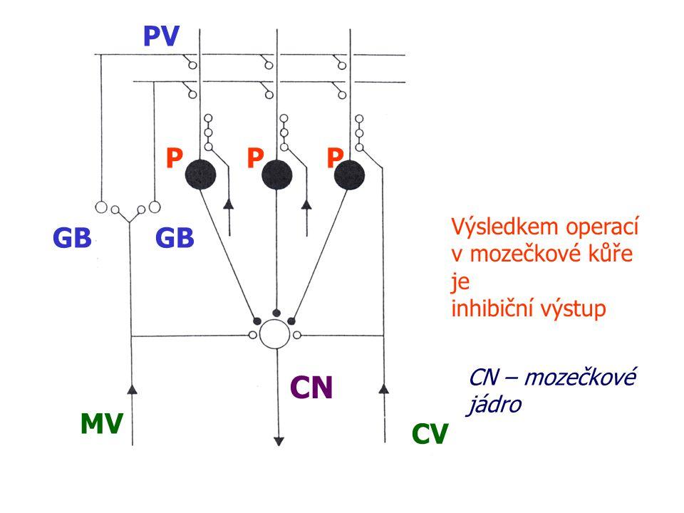 PV P P P GB GB MV CV CN Výsledkem operací v mozečkové kůře je