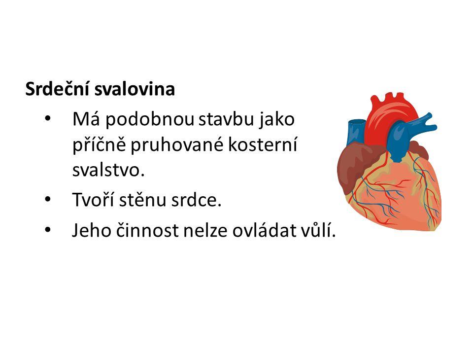Srdeční svalovina Má podobnou stavbu jako příčně pruhované kosterní svalstvo. Tvoří stěnu srdce.