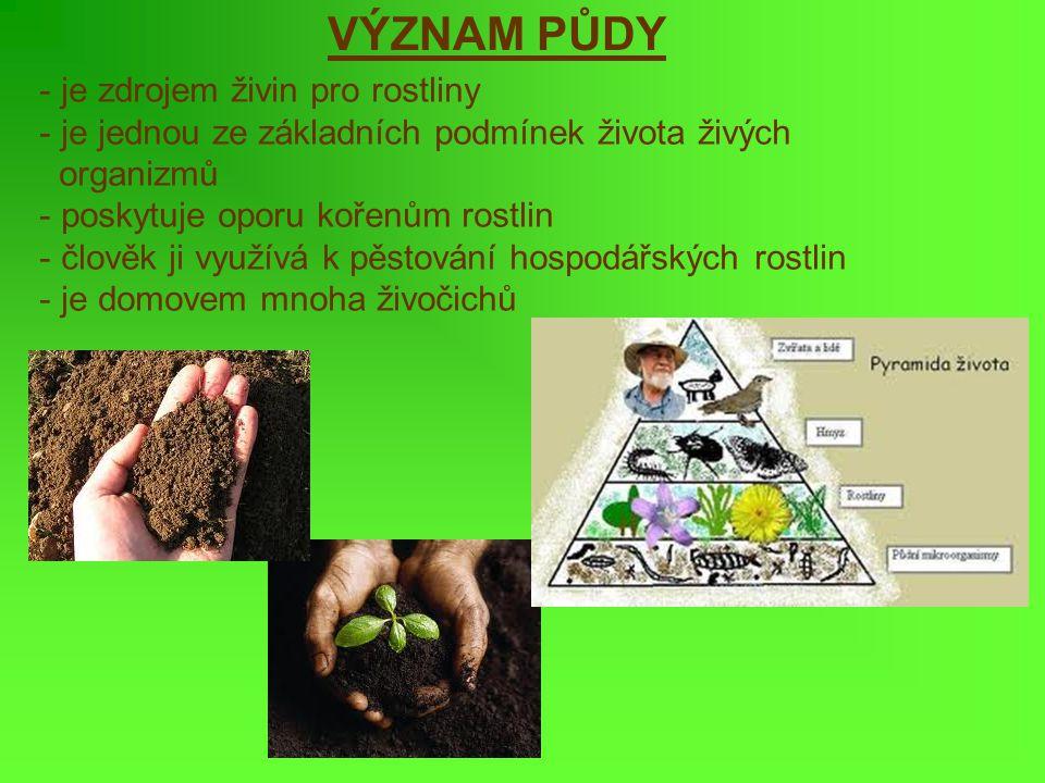 VÝZNAM PŮDY je zdrojem živin pro rostliny