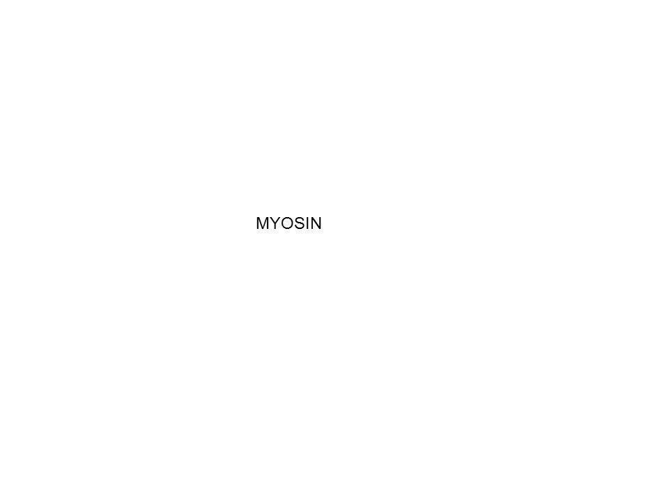 MYOSIN