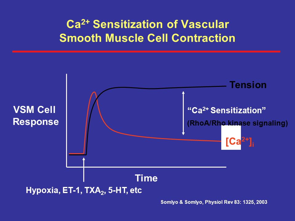 Ca2+ Sensitization of Vascular Smooth Muscle Cell Contraction