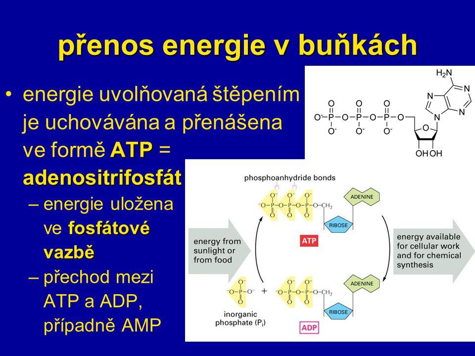 přenos energie v buňkách