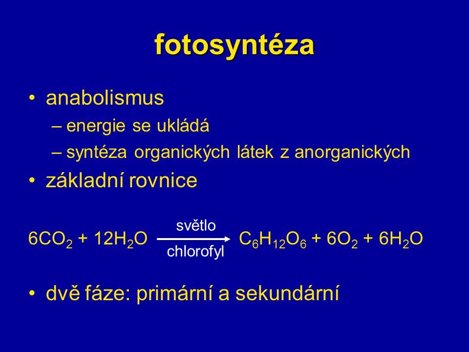 fotosyntéza anabolismus základní rovnice