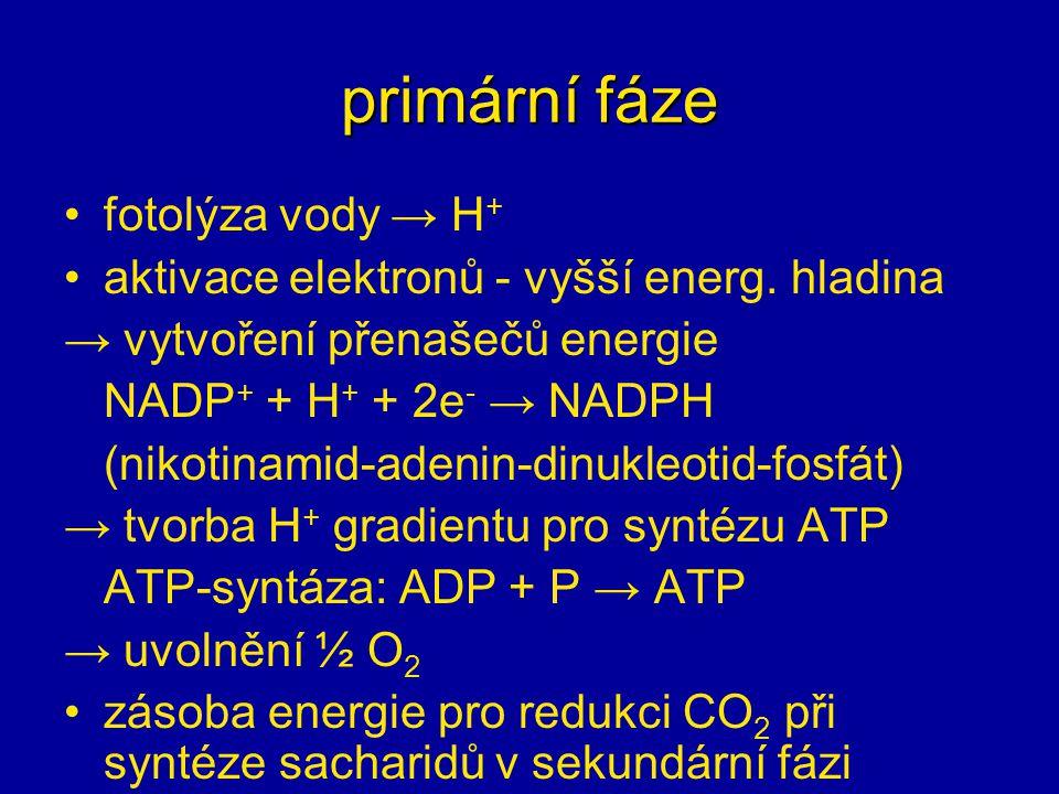 primární fáze fotolýza vody → H+