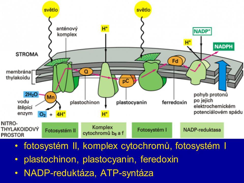 fotosystém II, komplex cytochromů, fotosystém I