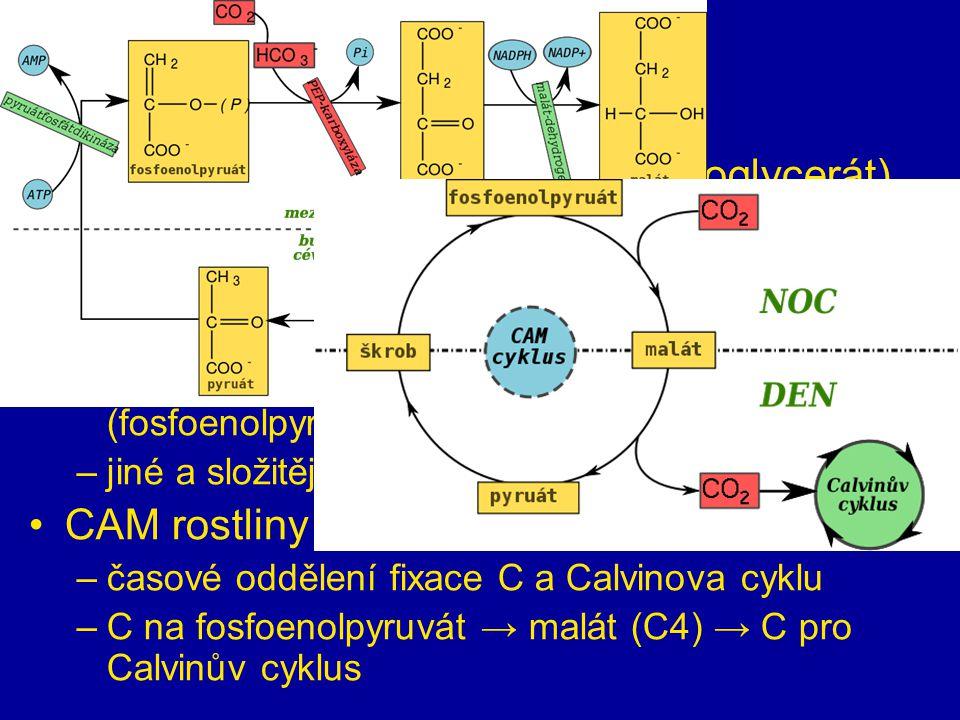 sekundární fáze C3 rostliny – 1. produkt je C3 (fosfoglycerát)