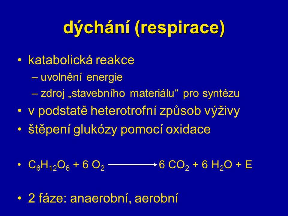 dýchání (respirace) katabolická reakce
