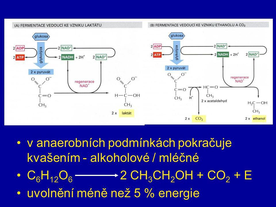 anaerobní fáze = glykolýza v cytoplazmě