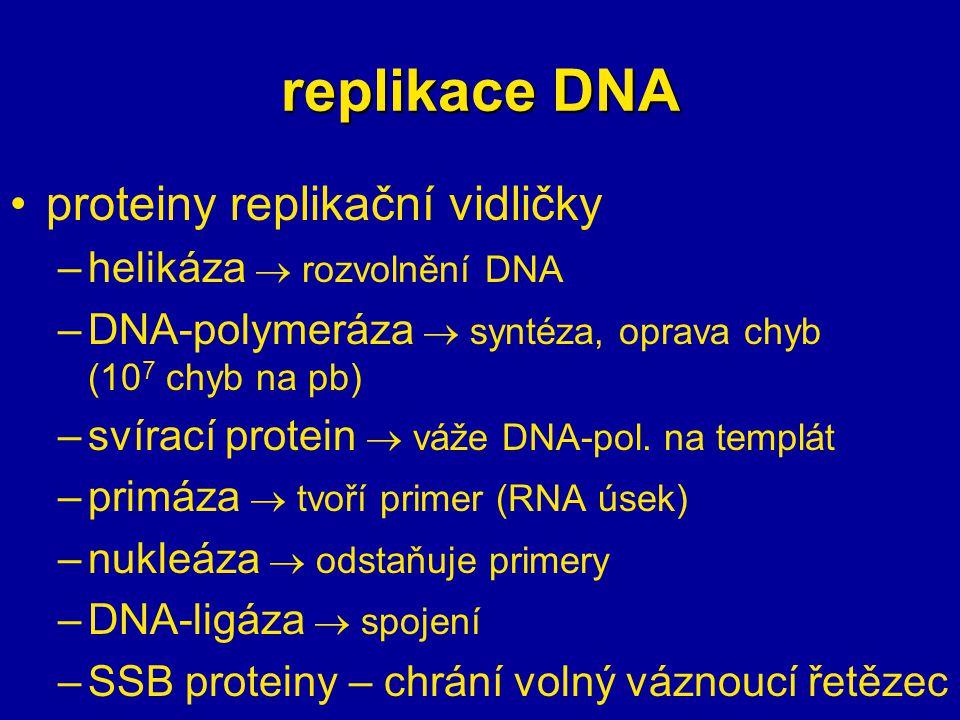 replikace DNA proteiny replikační vidličky helikáza  rozvolnění DNA