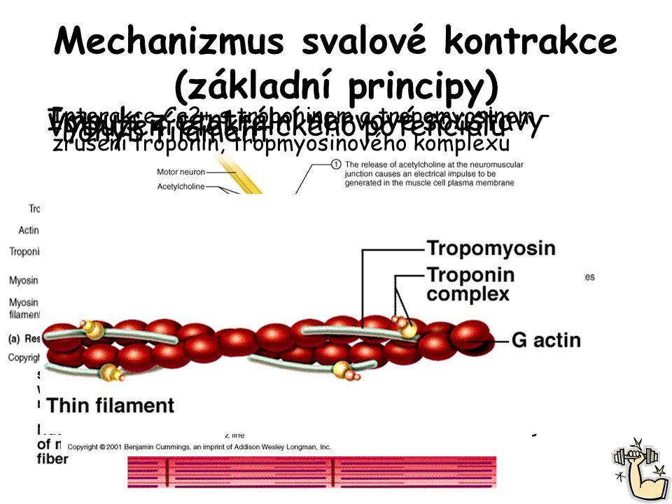 Mechanizmus svalové kontrakce (základní principy)