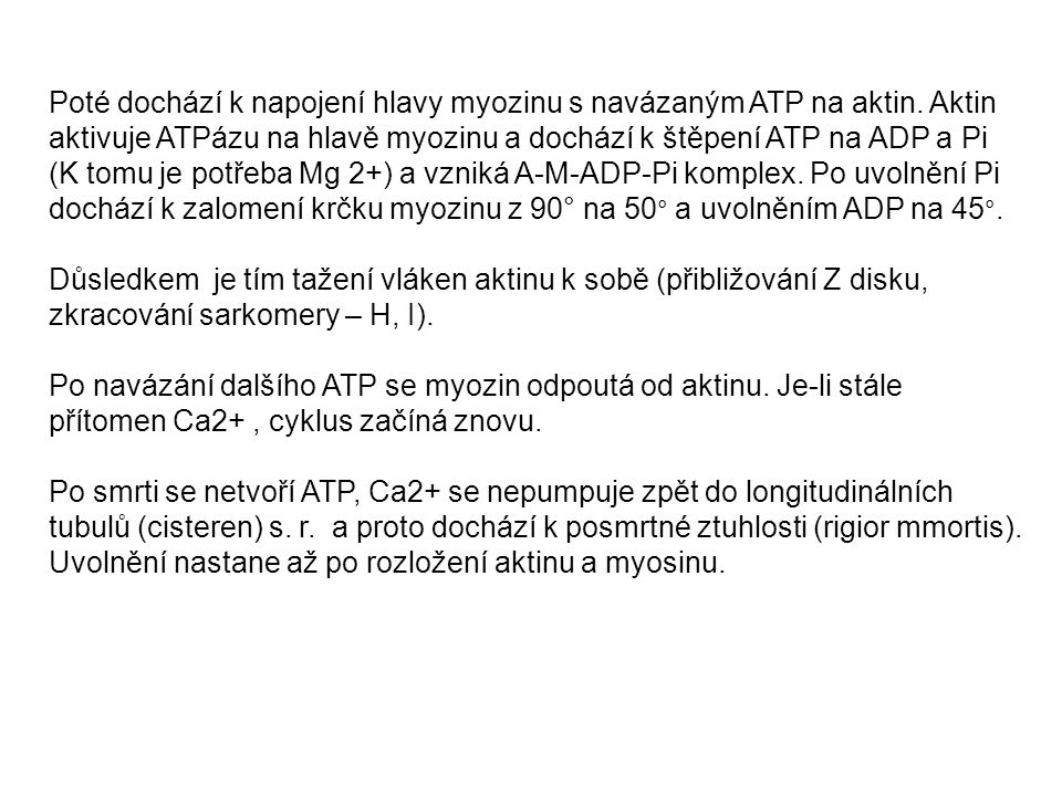 Poté dochází k napojení hlavy myozinu s navázaným ATP na aktin