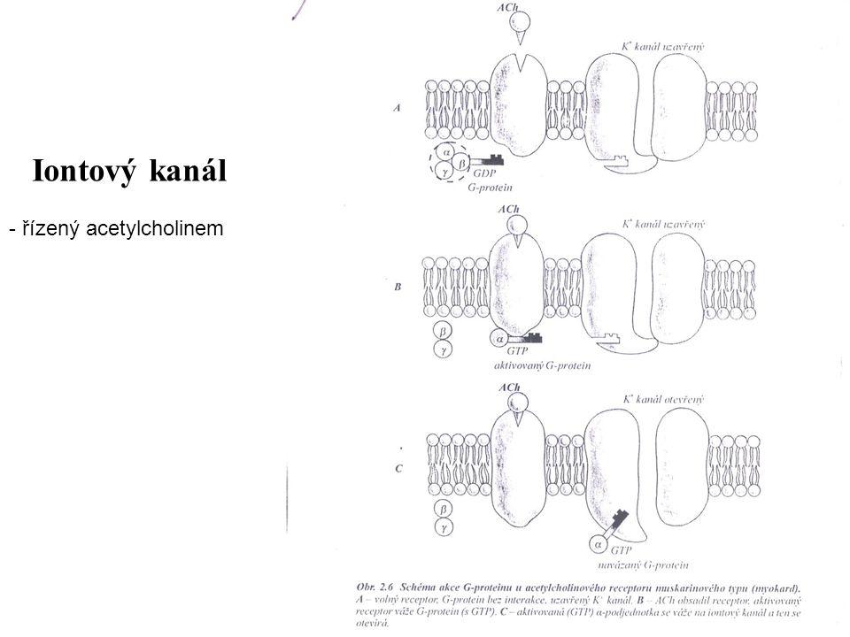 Iontový kanál řízený acetylcholinem
