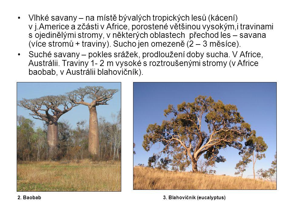 Vlhké savany – na místě bývalých tropických lesů (kácení) v j