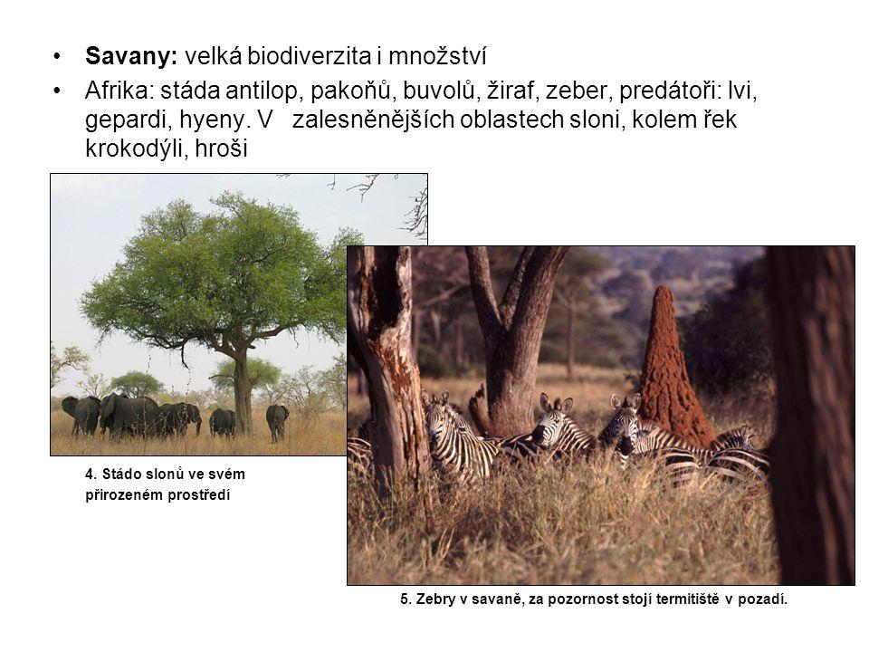 Savany: velká biodiverzita i množství