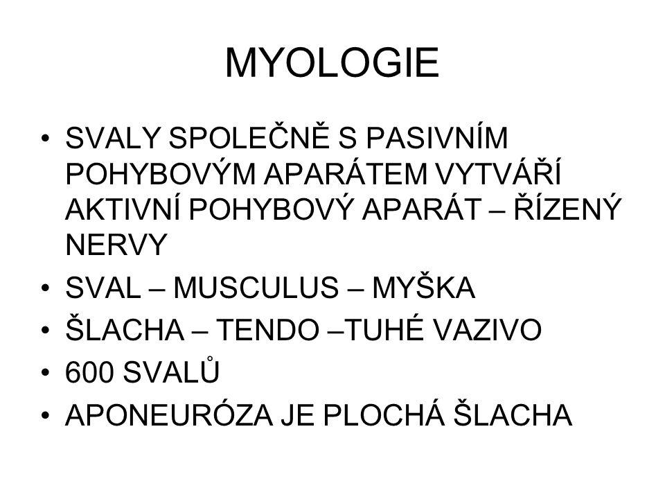 MYOLOGIE SVALY SPOLEČNĚ S PASIVNÍM POHYBOVÝM APARÁTEM VYTVÁŘÍ AKTIVNÍ POHYBOVÝ APARÁT – ŘÍZENÝ NERVY.