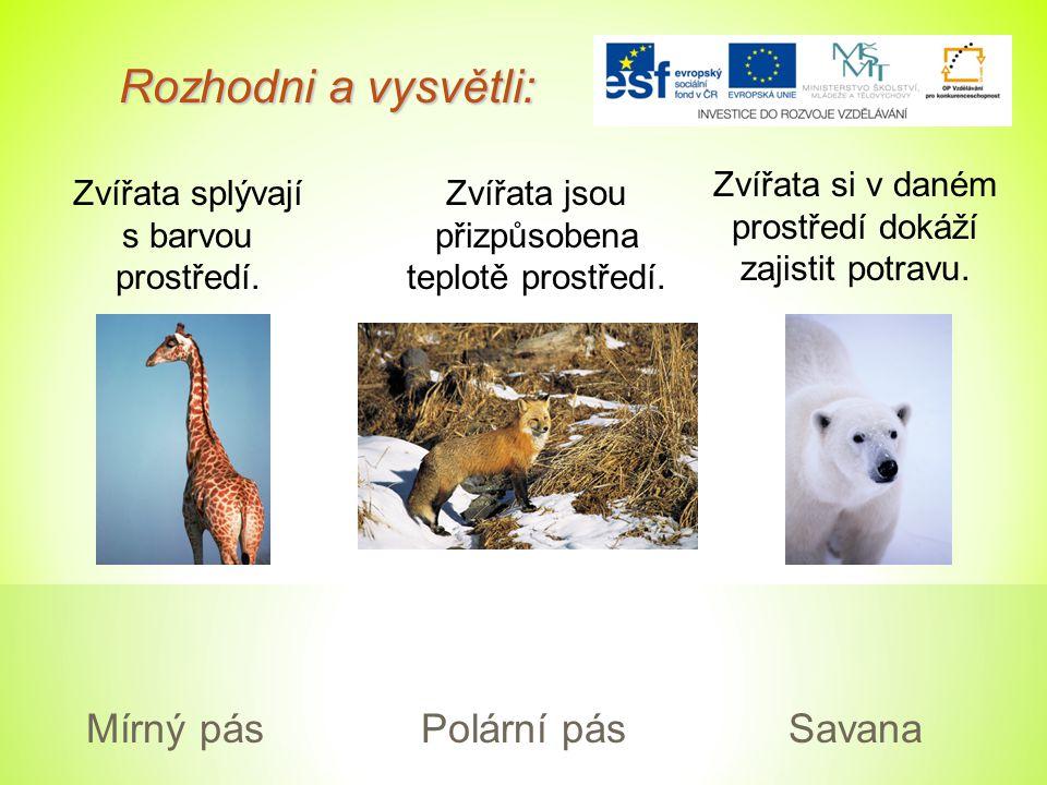 Rozhodni a vysvětli: Mírný pás Polární pás Savana