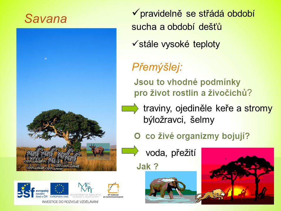 Savana pravidelně se střádá období sucha a období dešťů Přemýšlej: