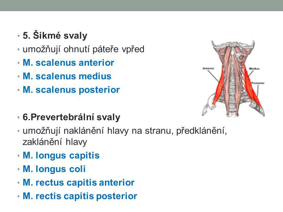 5. Šikmé svaly umožňují ohnutí páteře vpřed. M. scalenus anterior. M. scalenus medius. M. scalenus posterior.