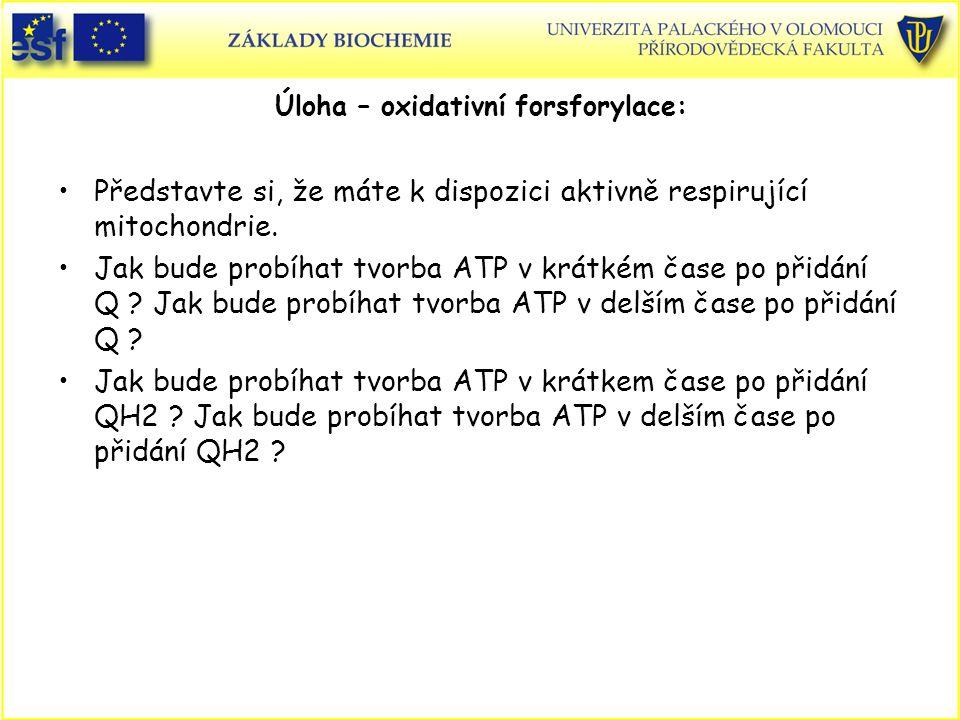 Úloha – oxidativní forsforylace: