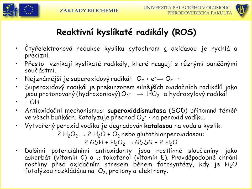 Reaktivní kyslíkaté radikály (ROS)