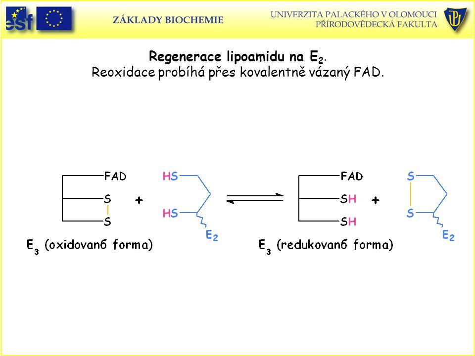 Regenerace lipoamidu na E2