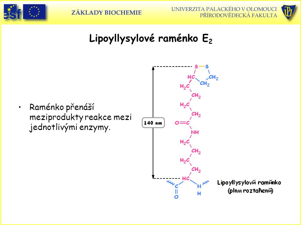 Lipoyllysylové raménko E2