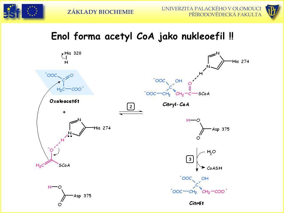 Enol forma acetyl CoA jako nukleoefil !!