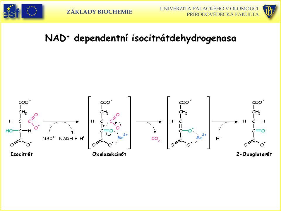 NAD+ dependentní isocitrátdehydrogenasa